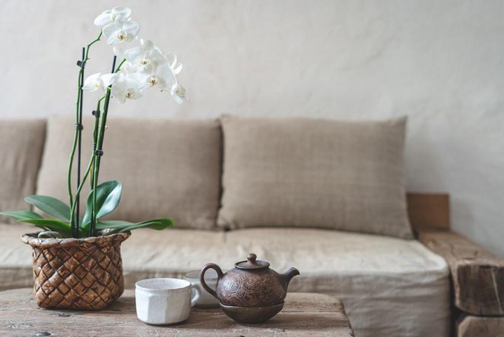 Как ухаживать за орхидеей чтобы она цвела как сумасшедшая?
