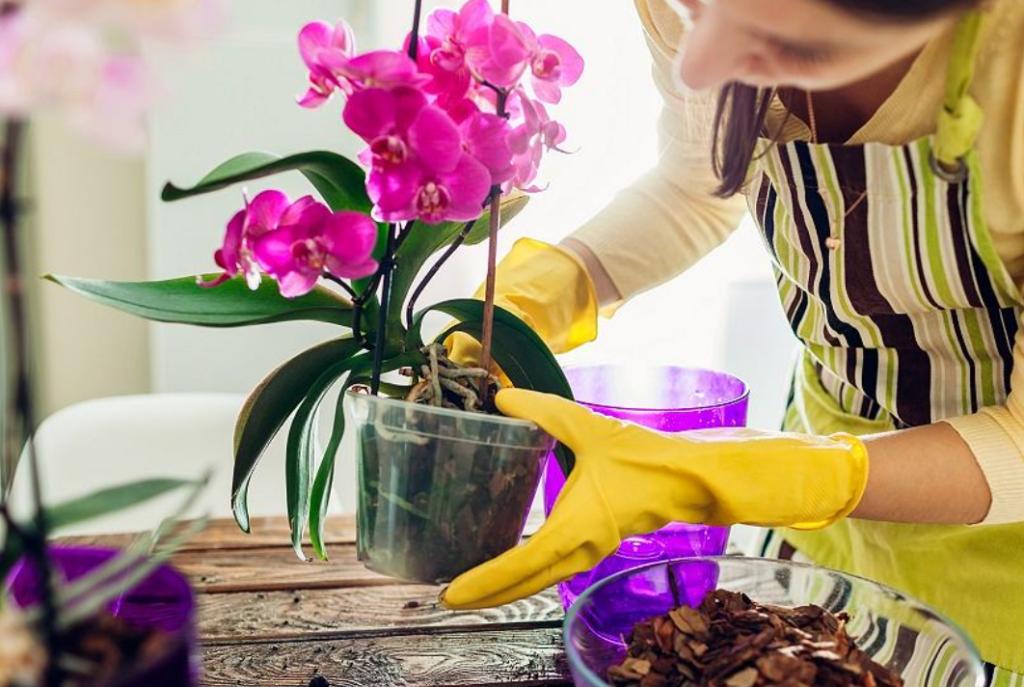 Как ухаживать за орхидеей, чтобы она цвела как сумасшедшая?