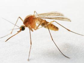 Почему комары кусают не всех?